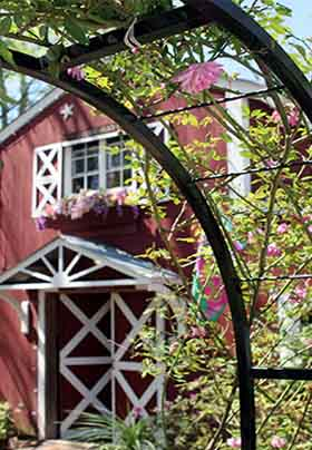 Close up of red barn door seen through arched trellis with pink roses growing over it