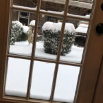 Snow on bushes looking out a doorway