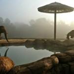 Caldwell Zoo elephant habitat