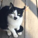 picture of our black and white cat groucho