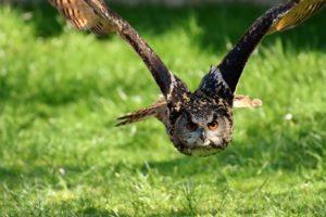 tyler state park owl